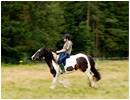 Horse Riding & Pony Trekking in Scotland